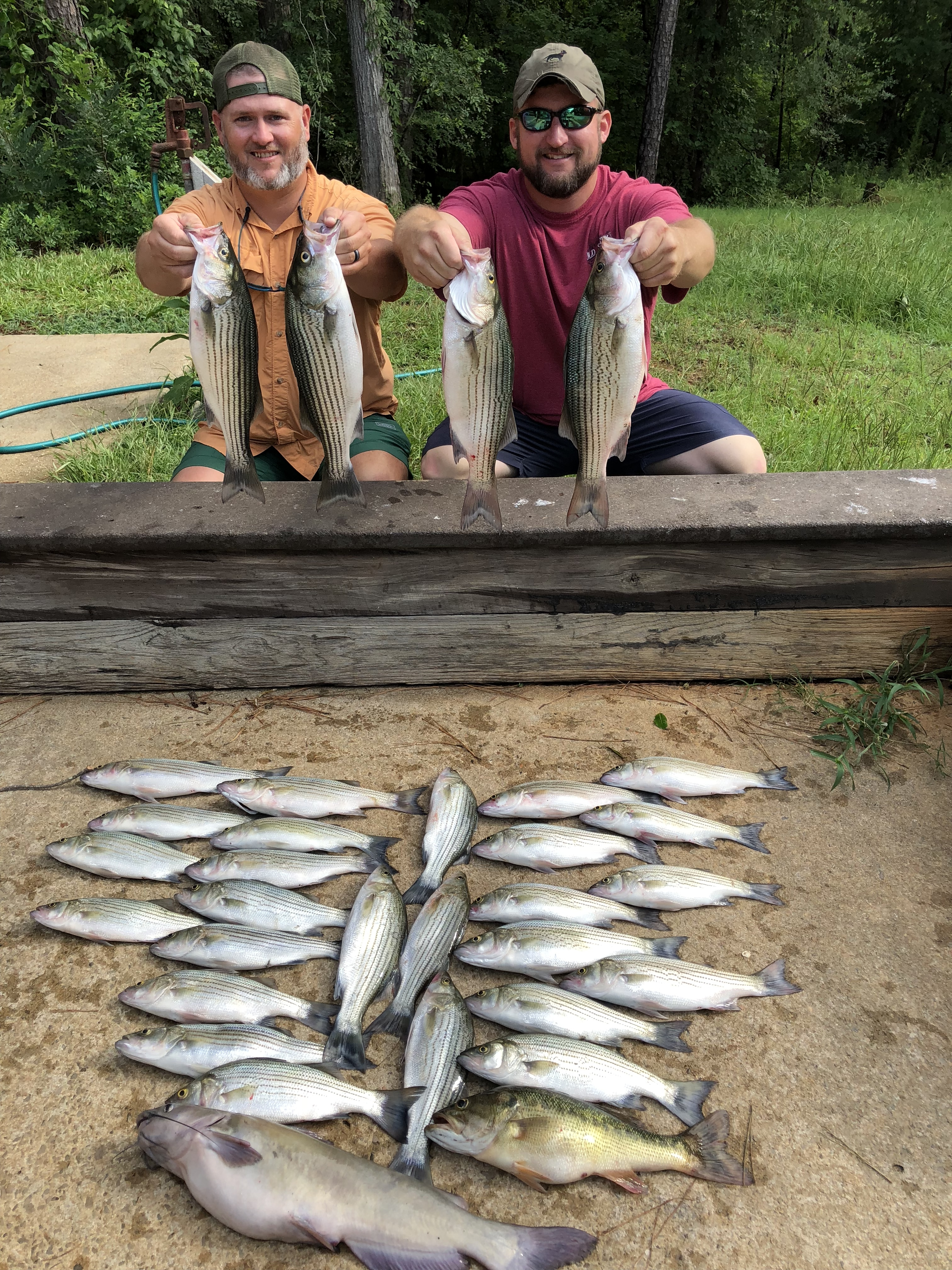 June 27, 2018 Brandon Brannen and Chris Dye with their limit of stripers and hybrids.IMG_2240