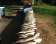 June 3, 2017 Bonnie Jackson with 30 stripers that she caught with Larry Freeman and captain Billy