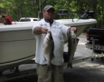 Jim Murphy with 2 of the 38 stripers Caught on umbrella rigs.