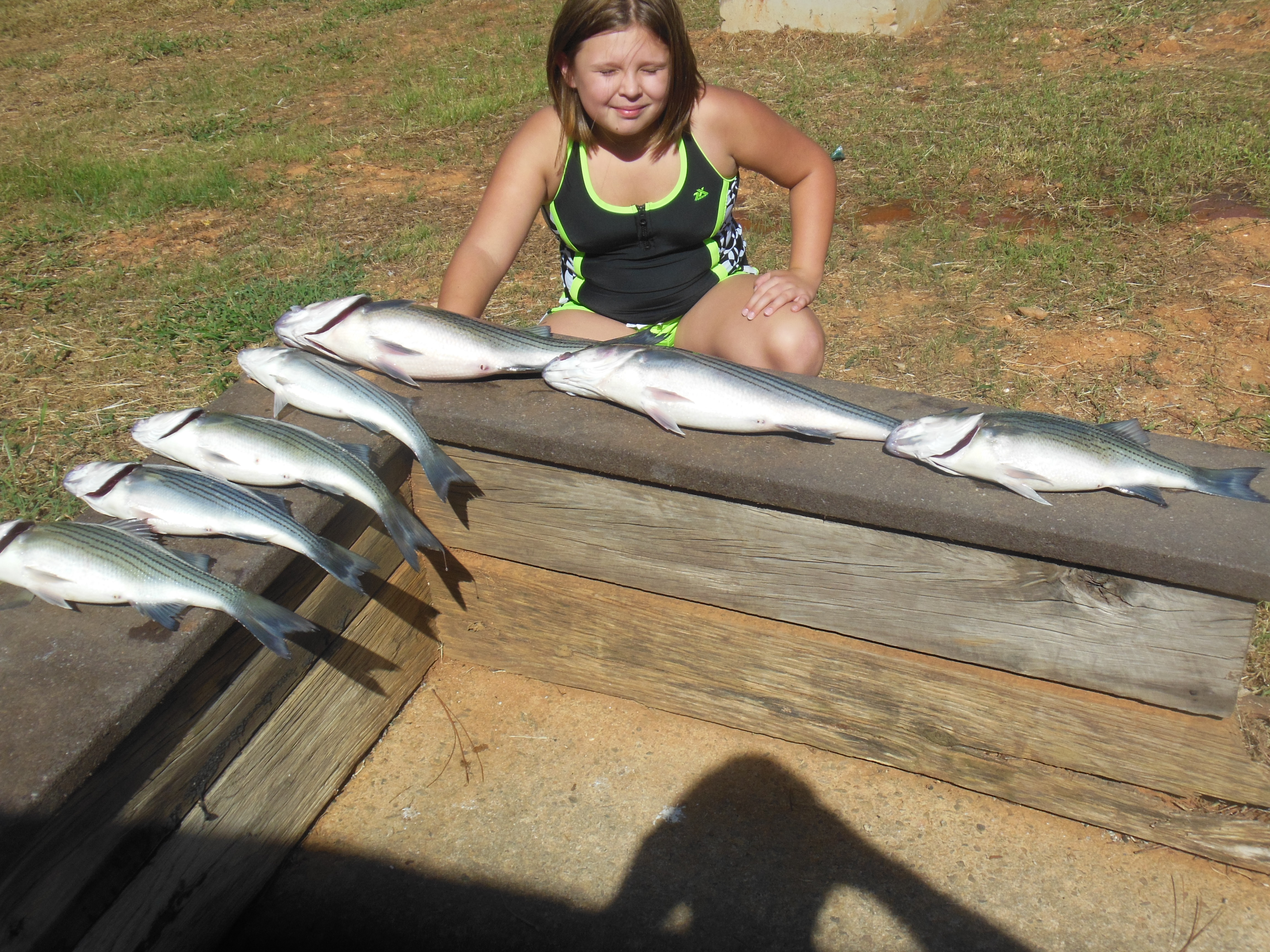Abby's 6 stripers and hybrids