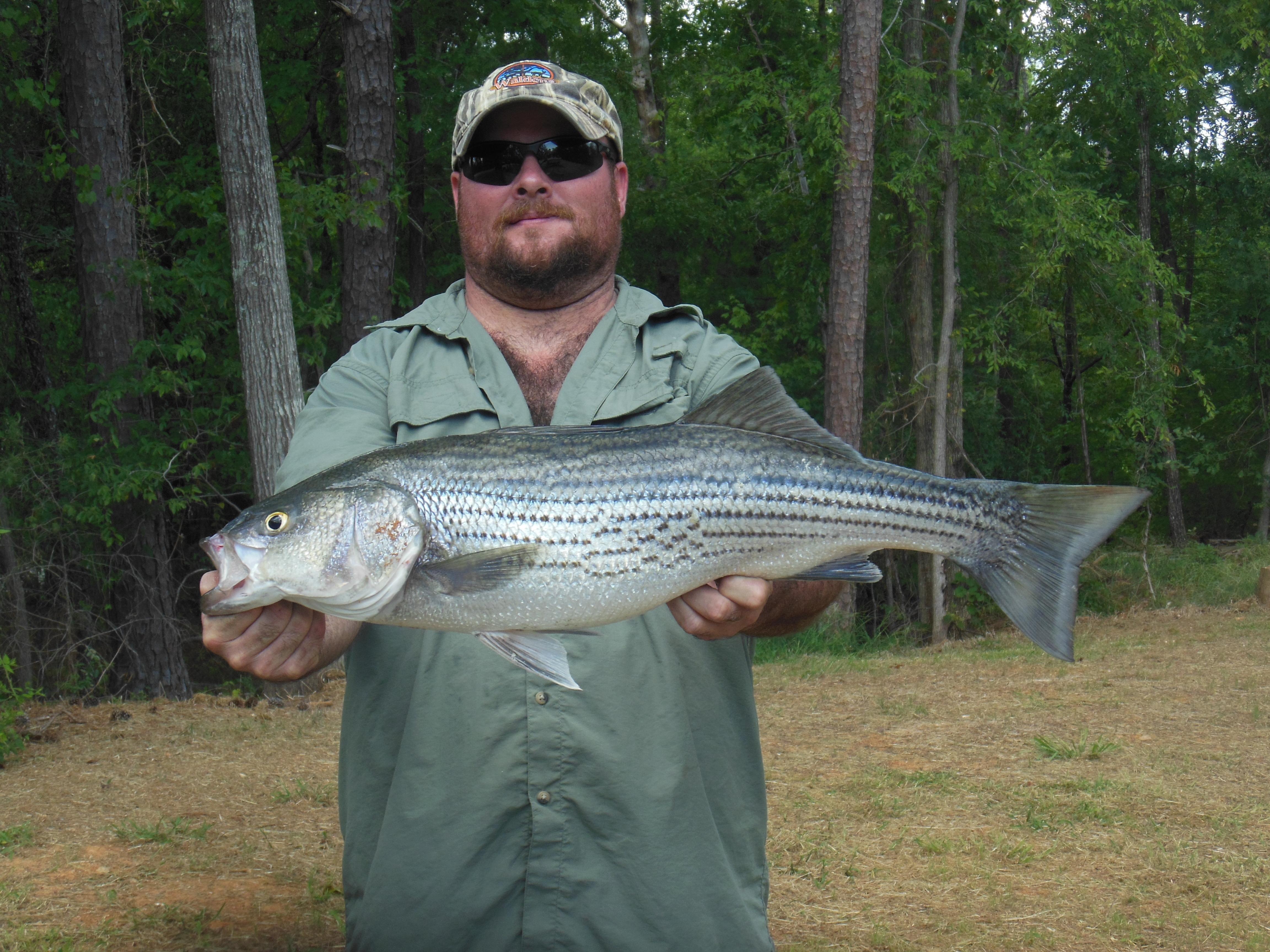 Brad's 12 lb striper