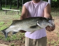 June-11-2020-Johnathan-Murphy-with-his-8-pound-striper.-IMG_3270
